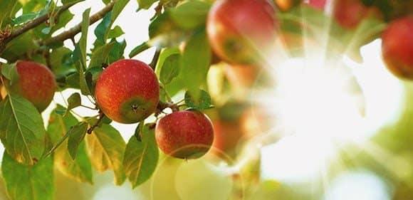 Permacultuur appels