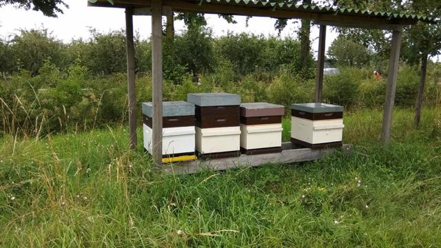 permacultuur bijen Beusichem