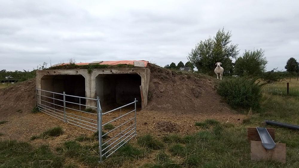 permacultuur schapen Beusichem